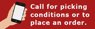 call for picking conditions
