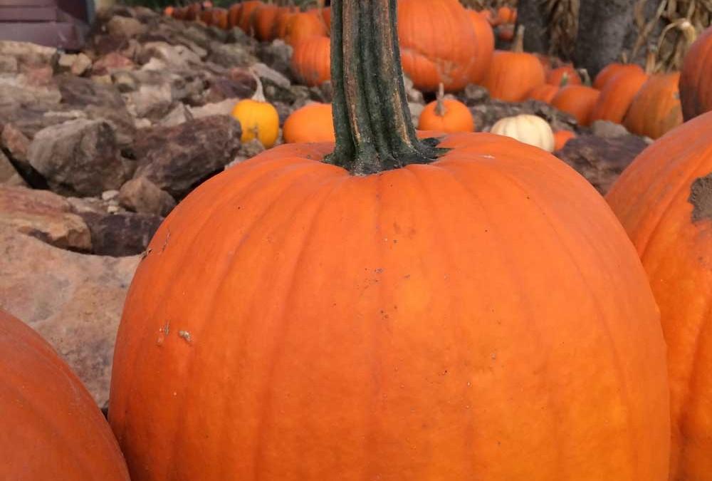 Yummy Pumpkin Seed Snack