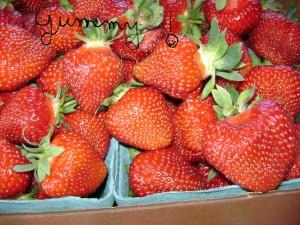 Strawberry Picking Northeast Wisconsin